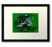 Beautiful Butterfly on flower Framed Print