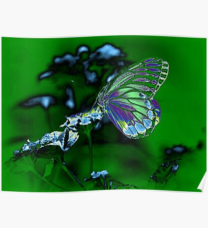 Beautiful Butterfly on flower Poster