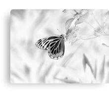 Beautiful Butterfly on flower - Black and White Canvas Print
