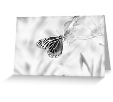 Beautiful Butterfly on flower - Black and White Greeting Card