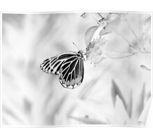 Beautiful Butterfly on flower - Black and White Poster
