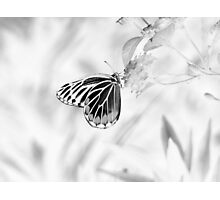 Beautiful Butterfly on flower - Black and White Photographic Print
