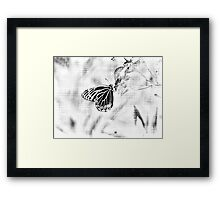 Vintage Beautiful Butterfly on flower - Black and White Framed Print