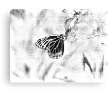 Vintage Beautiful Butterfly on flower - Black and White Canvas Print