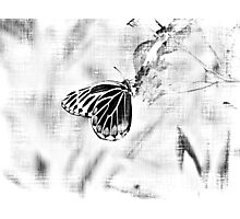 Vintage Beautiful Butterfly on flower - Black and White Photographic Print