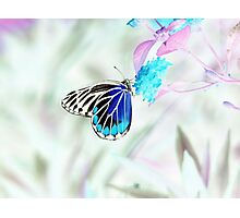 Beautiful Butterfly on flower - Negative Photo Photographic Print