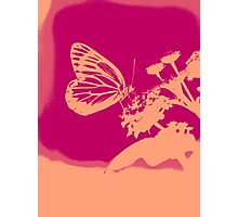Pop Art Butterfly on flower Poster Photographic Print