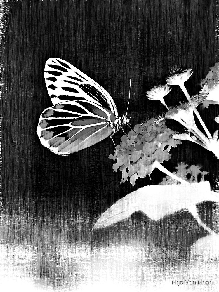 Vinatge Butterfly on flower - Black and White by Nhan Ngo
