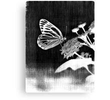 Vinatge Butterfly on flower - Black and White Canvas Print
