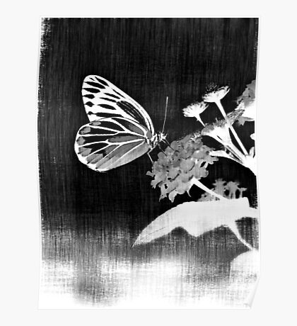 Vinatge Butterfly on flower - Black and White Poster