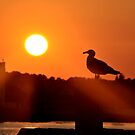 Sunset Gull by Robin Black