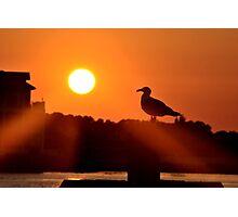 Sunset Gull Photographic Print