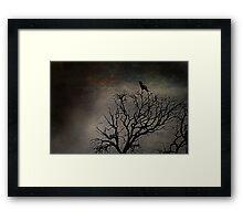Black Bird Fly Framed Print