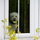 Doggie in the window by Jordon Wicks