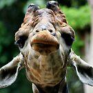 Giraffe Contemplation by KelseyGallery