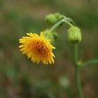 Yellow Flower by theartguy
