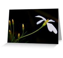 Ricinocarpos pinifolius  Greeting Card