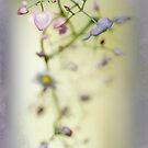 Begonia Blur by Dianne English
