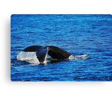 Humpback Whale Diving Canvas Print