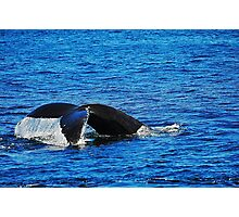 Humpback Whale Diving Photographic Print