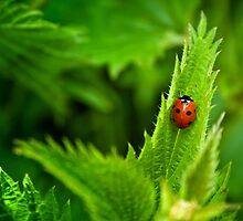 Ladybird in the nettles by Vicki Field
