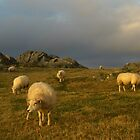 Sheep in evening light by flips99