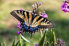 Butterfly 1 Copy by Eileen McVey