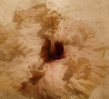 """""""As She Lay Against the Silk.............."""" by Rosehaven"""