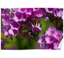 Acrobatic bee Poster
