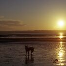 Cody at sunset. by Michael Haslam