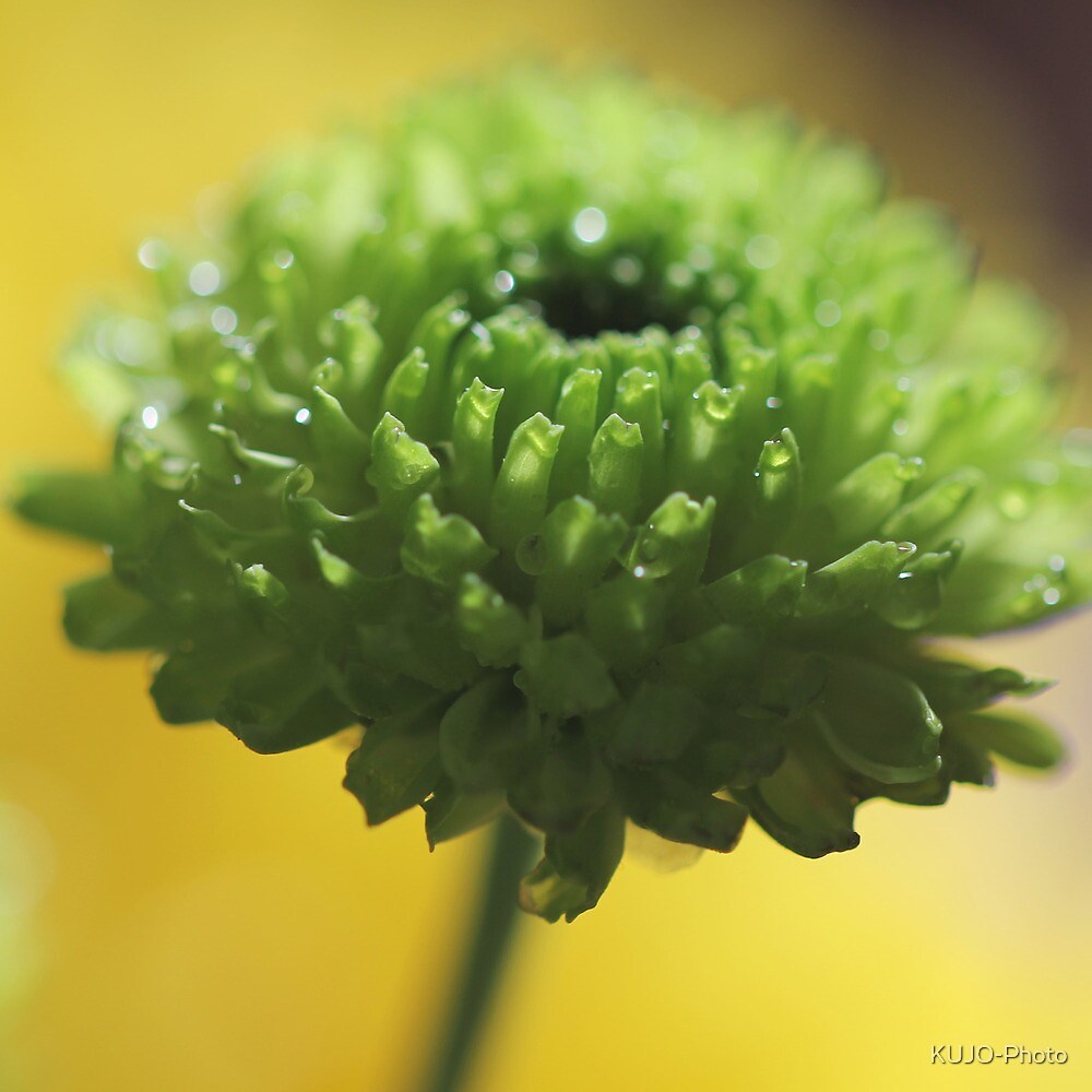 Little green Delight by KUJO-Photo