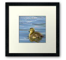 First Swim... Framed Print