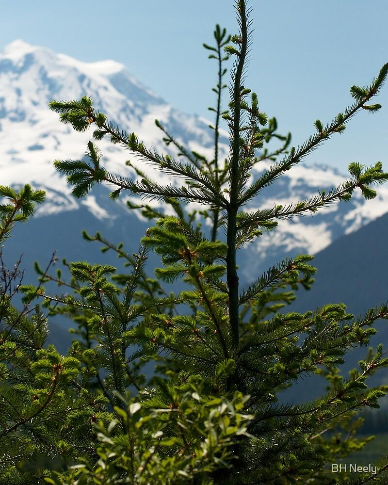 Fir Tree and Mt. Rainier by BH Neely