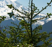Fir Tree and Mt. Rainier by BH Neely