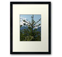 Fir Tree and Mt. Rainier Framed Print