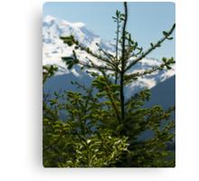 Fir Tree and Mt. Rainier Canvas Print
