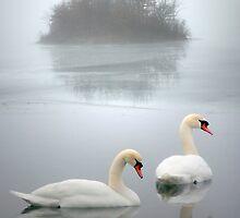 Swan Lake by Roger Maynard