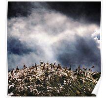A Natural Storm Poster