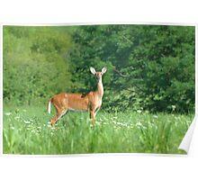 Doe in field of flowers Poster
