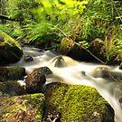 The unidentified stream in Hillerstorp I by João Figueiredo