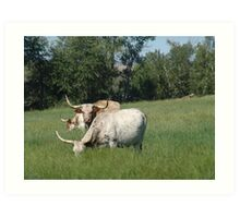 LONGHORNS  Art Print