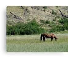 HORSE IN A MONTANA PASTURE Canvas Print