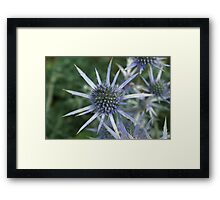 Spikes of Blue  Framed Print
