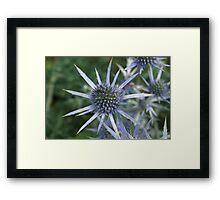 Spikes of Blue  Framed Print