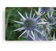 Spikes of Blue  Canvas Print