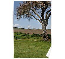 Prairie Tree Framing a Farmhouse Poster