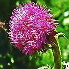 bee attack by NIKULETSH