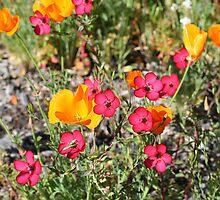 California Wildflowers by Pamela Schneider