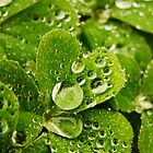 Droplets and Clover by artddicted