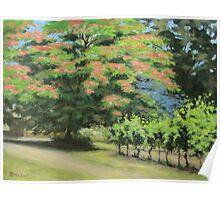 Vineyard Mimosa Poster